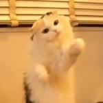 お手々でちょんちょん!テルミンを演奏するネコに萌え死ぬ!