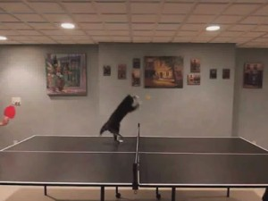 ninjya_cat_playing_ping_pong_00